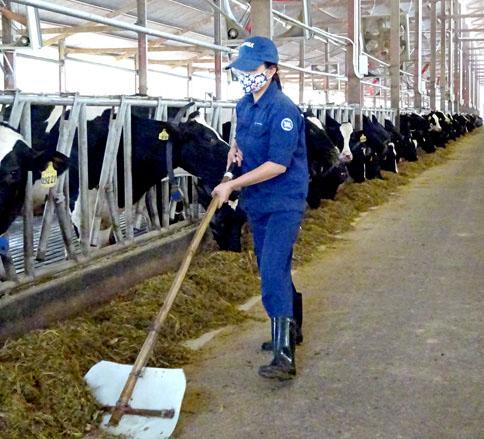 Trang phục công nhân bò sữa